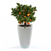 Parrot Flower Pot for iOS and Android (white)