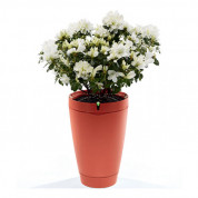Parrot Flower Pot for iOS and Android (red)