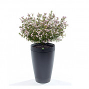 Parrot Flower Pot for iOS and Android (black)